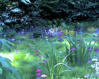 Shaded Garden with Iris Notecards