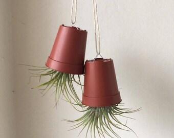 Upside down Hanging Planter with Tillandsia Air Plants, Air Plant, Tillandsia, hanging planter