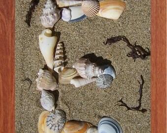 Alphabet, Shells, E,  Printable Wall Art, SeaShell, Child, Beach, Spell, Summer,Inspirational, Motivational, Instant Digital Download,