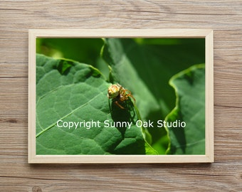 Photograph of Six-Spotted Orb Weaver spider, Orb Weaver spider photo, spider photo, arachnid photo, animal photo