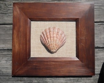 Scallop Shell in Wooden Frame