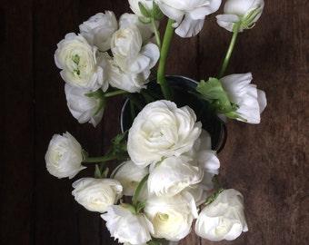 white ranunculus - 1.
