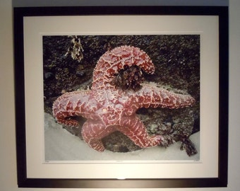 Framed Color Print of Starfish