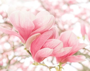Flower Photography, Nature Photography, Magnolia Photo, Magnolia Print, Flower Print, Fine Art Print, Wall Art, Flower Photo, Rekindle