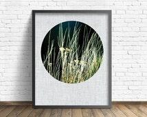 "nature photography, black, large art, large wall art, printable art, instant download printable art, nature prints, rustic - ""Wild Grasses"""