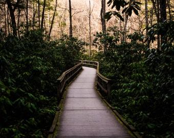 boardwalk walk way in the woods