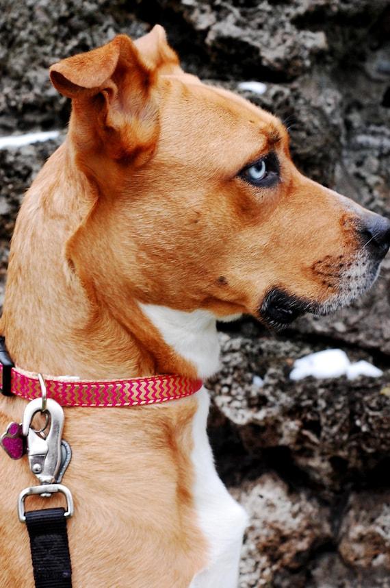 Chevron Pink and Gold Dog Collar Modern Girl