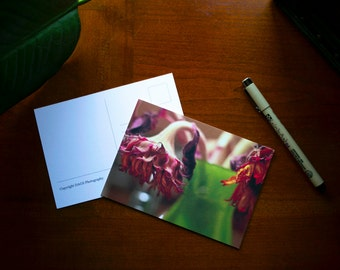 Vibrant Flower Postcard