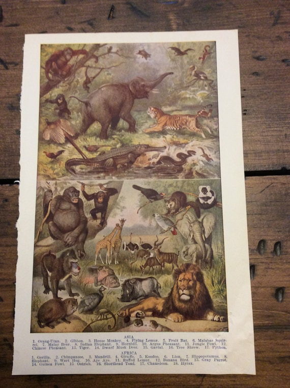 Antique Print - Animals of Asia, Animals of Africa - Book Plate (B016)