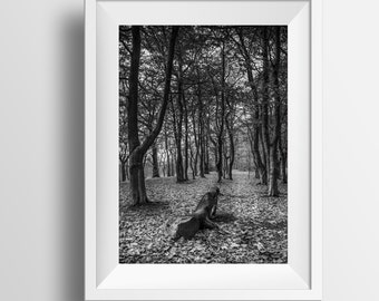 Black and White Photo, Forest Photograph, Woodland Winter Landscape, Wall Art, Fine Art Print, Photography, Woods, Forrest, Trees Photo