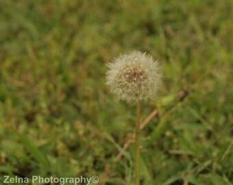 Wish.