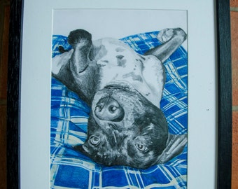 Staffie on the bed. study 1