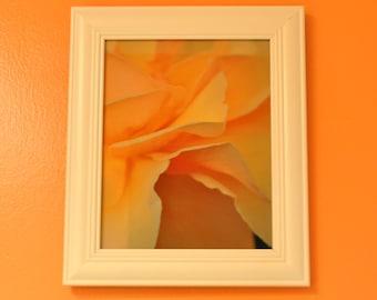 Framed  Peach Rose Photograph