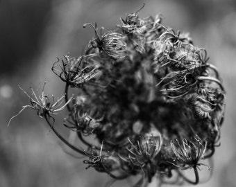 Black and white Photograph,  Fine Art Black and White Print