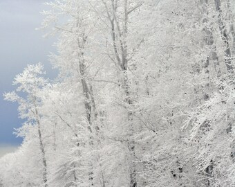 Snow-covered trees photograph