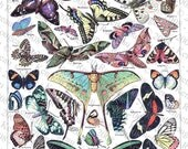 Butterflies & Moths #1 - 5 Pack of Printable Digital Collage Sheets - Instant JPEG Downloads