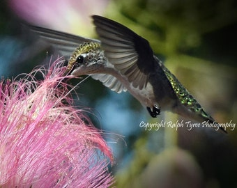 Ruby Throated Hummingbird #2851