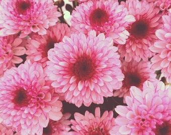Chrysanthemum Buttons