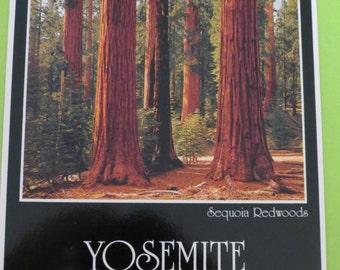 Sequoia Redwoods Postcard