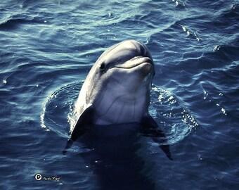 Dolphin   Art canvas photo print  ~  picture, fine art,  archival.
