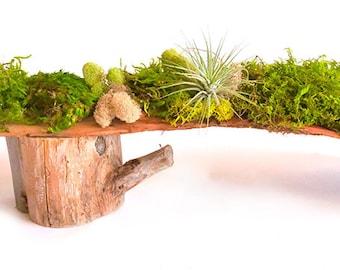 Palm Spathes Moss Centerpiece
