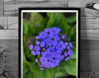 Flower photography, macro, color photography, nature, purple flowers, instant download, printable art, home decor