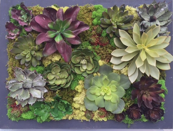 Faux Succulent Wall Art. I Used To Live In A Room Full Of Mirrors. Simple Decoration Ideas For Living Room. Living Room Or Living Room. Carpet Size For Living Room. Broyhill Living Room Set. Wall Papers For Living Room. Living Room Bunting. Best Colors To Paint Living Room Walls