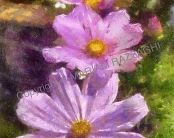 Digital Download Pink Cosmos flower