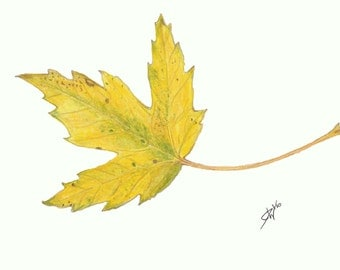 "Autumn Maple Leaf Print   5"" x 7"""