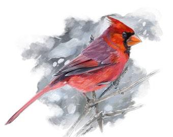 Cardinal in Winter
