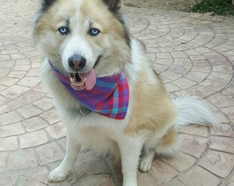 Dogs bandanas made from local plaid textile.(purple/blue)