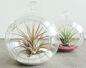 Ornament Terrarium