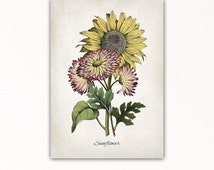 VINTAGE SUNFLOWER print, vintage sunflower poster, vintage sunflower decor, botanical art, kitchen, restaurant, dining room, #3062