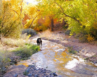 Fall Foliage in Pilar Canyon--Wolfe in Paradise