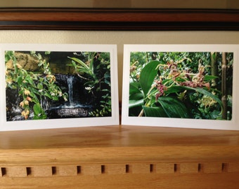 Green Photos on Blank Greeting Cards