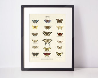 Antique butterfly print | Nature prints, insect, botanical, wall art, room decor, vintage print, watercolour | High quality print