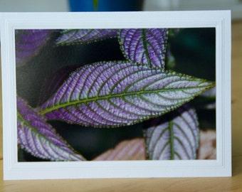 Photo Greeting Card | Handmade Card | Blank Card | Photo Note Card | Photography Card | Blank Photo Card | Persian Shield | Purple | Garden