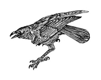 Le Corbeau (The crow) wood engraving