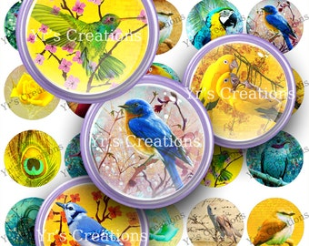 Digital Collage Sheet BIRDS & OWLS 1.5 inch circle - Pendants Scrapbooking Mixed Media Jewelry