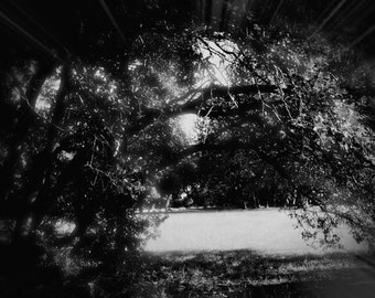 Nature Trees Landscape photography #2 *In Black and White*