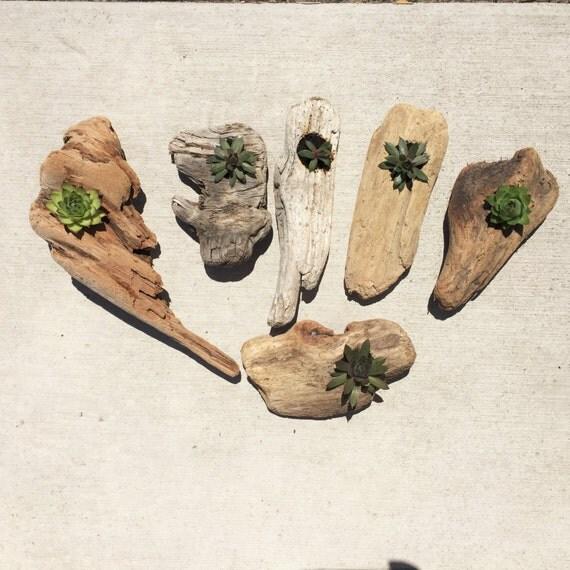 Driftwood Succulent Planters. Succulents. Succulent Planter