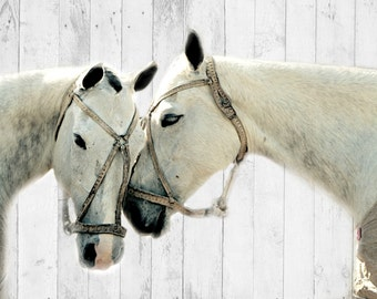 11 x 14 Print White Mares wood backdrop