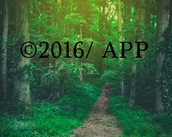 digital background of trees for composites