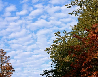 Fluffy Clouds in Fall//Fall//Fluffy Clouds//Blue Sky//Renee Dean Photography//Unframed