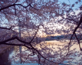 Cherry Blossom, Large Wall Art Print, Trees, Washington DC, Monument, Pink, Photography, Dreamy, Pretty, Decor, Fine Art- Ethereal Blossoms