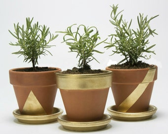 Goldmine Herb Garden Kit