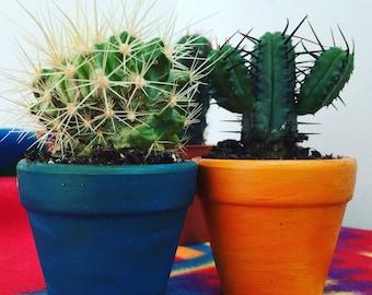 Wedding Favour/ Decor - Mini Cacti