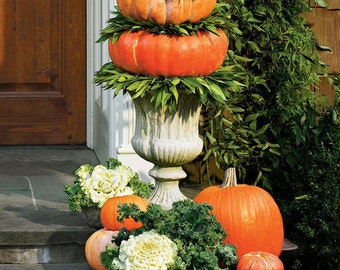 Set of Front Entryway Pumpkin Topiaries