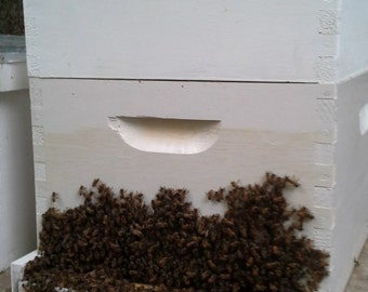 Natural pollination. Single deep full hive setup.