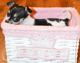 Digital Photography Print of a Chihuahua Puppy